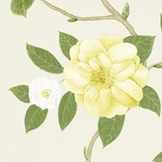 Sanderson Tapet Christabel Yellow/Ivory