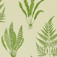 Sanderson Tapet Woodland Ferns Green
