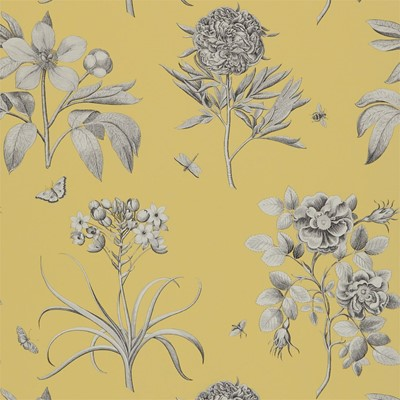 Sanderson Tapet Etchings & Roses Empire Yellow
