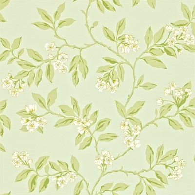 Sanderson Tapet Blossom Bough Duck Egg/Sage